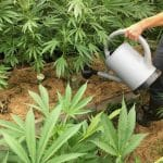 Weed, Grow, cannabis, automatic, RQS,