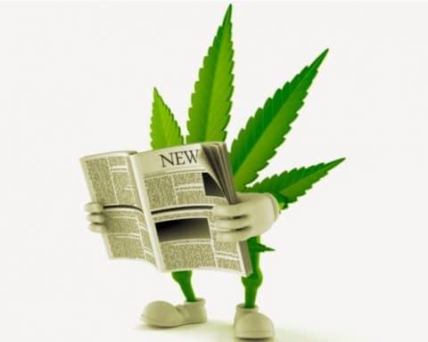 Revue de prese; CBD, THC, cannabis,