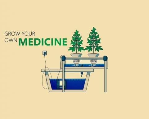 Cannabis, Strains, Genetics, Grow,