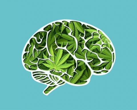Cannabis, mémoire,