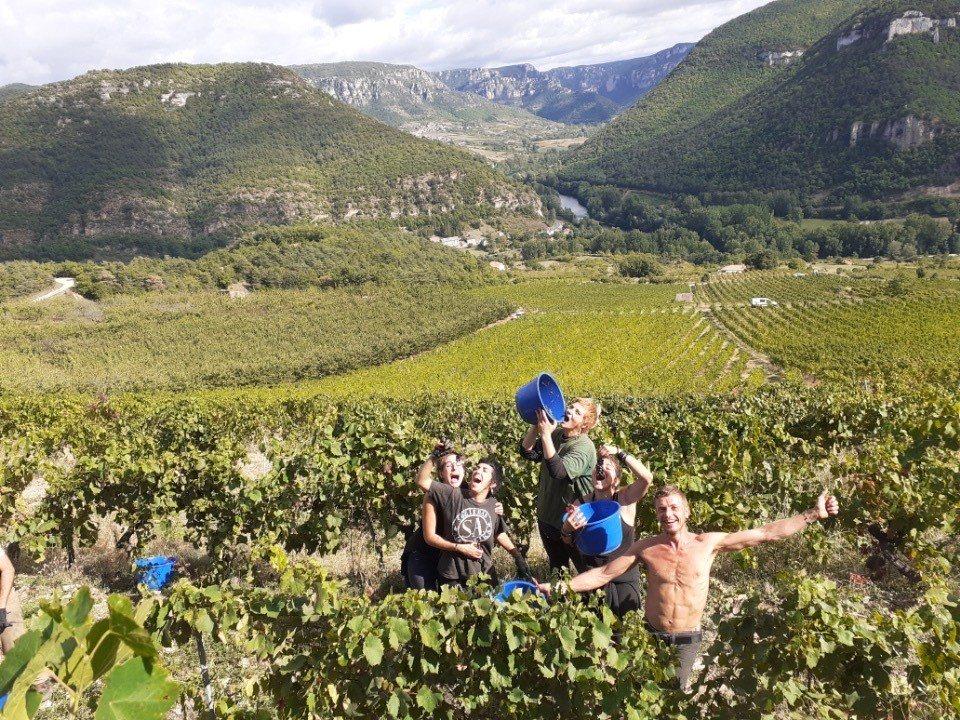 Vieux Noyer vendanges, l'étonnant, vin, CBD,